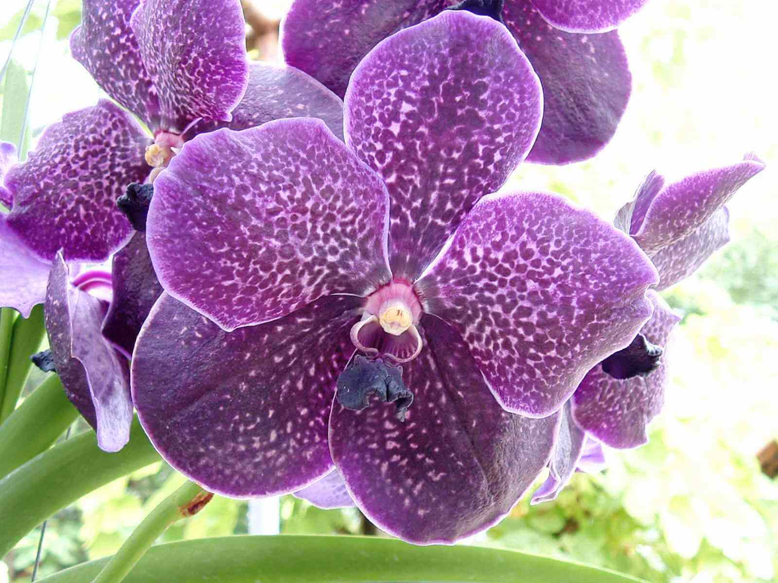 Rynco Orchids Online Shopping Cart - Home